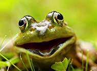 绿色的青蛙高清摄影图片