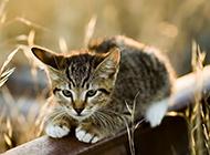 很萌的小猫高清摄影图片