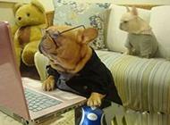 爆笑动物图片之狗教授