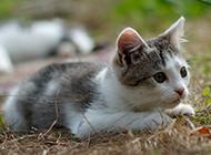 草地上的超可爱小猫图片