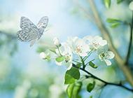 春天梦幻唯美蝴蝶壁纸精选
