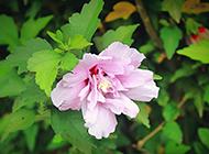 初春唯美植物花卉小清新风景壁纸