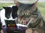 超搞笑的猫咪邪恶图