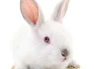 萌萌的小兔子高清图片素材