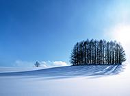 纯白梦幻的森林冬天雪景图片
