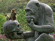 调皮搞怪的猴子图片