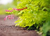 清新淡雅的小花背景图