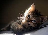 阳光下超萌的小猫图片