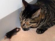 大胆的老鼠动物搞笑图