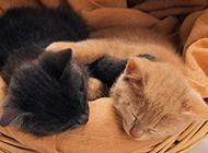 两只小猫睡觉的图片