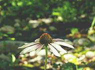 大自然草地植物花卉壁纸图片