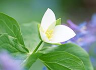 大自然花草简约淡雅背景素材