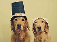 两只呆萌的狗狗动物图片