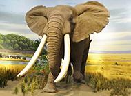 草原上孤独的大象图片