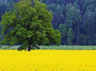 唯美小清新森林风景高清壁纸
