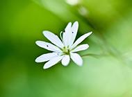 唯美清新的花朵ppt背景图片