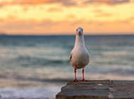 大海与海鸥高清唯美图片