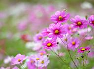 高清唯美的花卉桌面壁纸