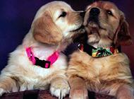 两只宠物狗狗搞笑图片