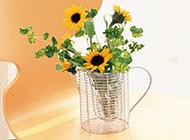 简约清新的高清植物花卉壁纸图片