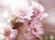 淡雅植物花卉背景图片素材