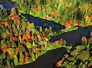 秋天的谢菲尔德树木电脑壁纸