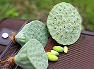 新鲜采摘的莲蓬高清图片