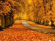 秋天公园金黄色落叶风景图片