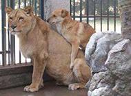 动物邪恶图片之爱真的需要勇气