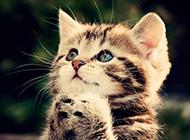 仰头祈祷的呆萌小猫咪壁纸