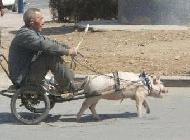 低碳的交通工具恶搞动物图片