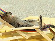 躺着享受的猫咪搞笑图片