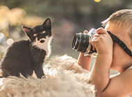 小清新意境超可爱猫咪壁纸