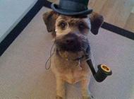 打扮绅士的狗狗恶搞图片