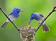 鸟喂食的高清摄影图片欣赏