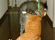 深情的一吻猫咪动物图片