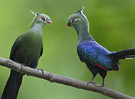 自然界羽毛精致的高清鸟类壁纸