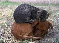 好和谐的猫狗搞笑动物图片