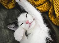 伸懒腰可爱的小猫咪壁纸