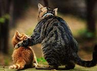 可爱的猫咪背影图片