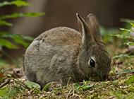 超可爱的小兔子摄影图片