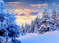 冬天的下雪风景唯美图片