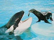 可爱又搞笑的动物图片