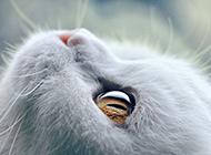 可爱的萌猫眼睛图片欣赏