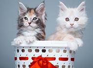 两只小猫在一起的图片欣赏