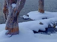 阿尔山森林公园冬日雪景图片
