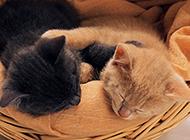 竹篮里睡觉的萌猫咪壁纸桌面