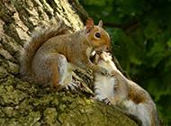 一对恩爱的松鼠动物高清图片