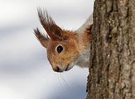 可爱机灵的小松鼠摄影图片