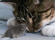 搞笑动物萌图之猫和老鼠